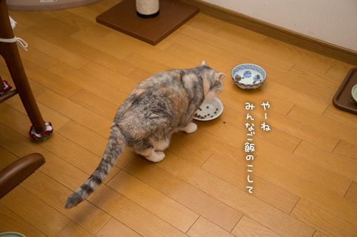祝☆まみちゃん15歳_d0355333_16370367.jpg