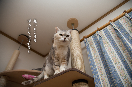 祝☆まみちゃん15歳_d0355333_16370430.jpg