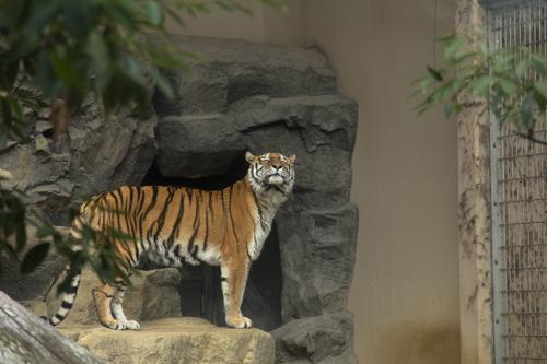 王子動物園へ_d0355333_16371135.jpg