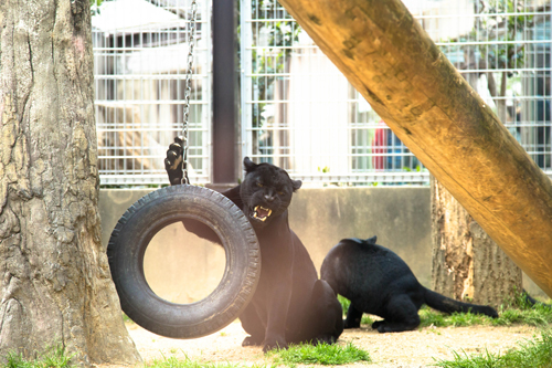 王子動物園へ_d0355333_16371183.jpg