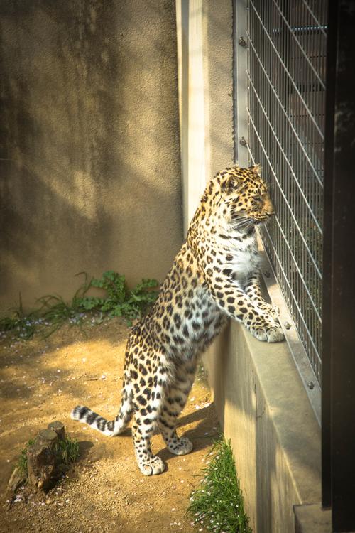 王子動物園へ_d0355333_16371249.jpg