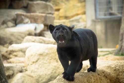 王子動物園へ_d0355333_16371285.jpg