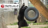 王子動物園へ_d0355333_16371307.jpg