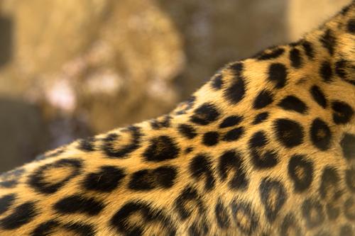 王子動物園へ_d0355333_16371326.jpg