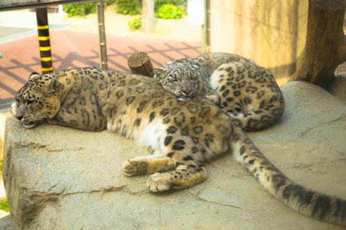 王子動物園へ_d0355333_16371368.jpg