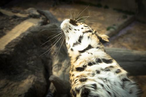王子動物園へ_d0355333_16371375.jpg