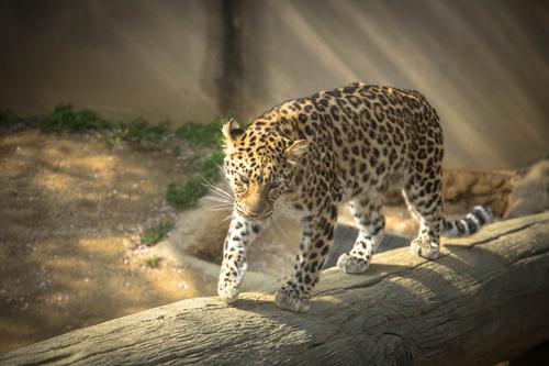 王子動物園へ_d0355333_16371382.jpg