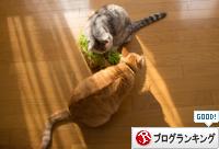 お野菜たべたら_d0355333_16373460.jpg