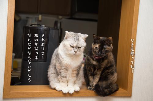 芸術の猫_d0355333_16374185.jpg