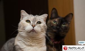 芸術の猫_d0355333_16374193.jpg