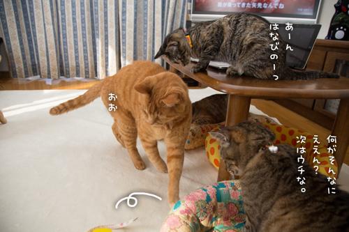 猫的興味のゆくえ_d0355333_16375056.jpg