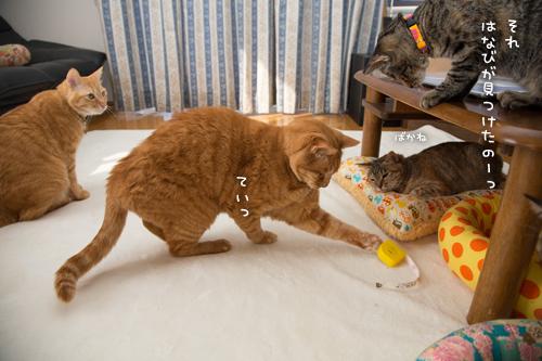 猫的興味のゆくえ_d0355333_16375088.jpg
