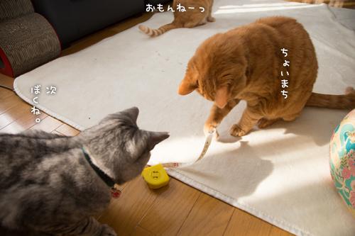 猫的興味のゆくえ_d0355333_16375153.jpg