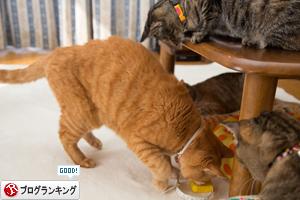 猫的興味のゆくえ_d0355333_16375158.jpg