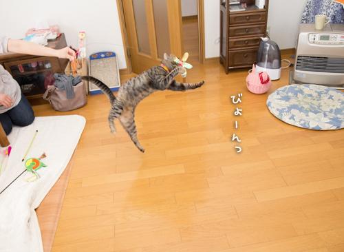 はなびちゃん接待猫への道_d0355333_16375771.jpg