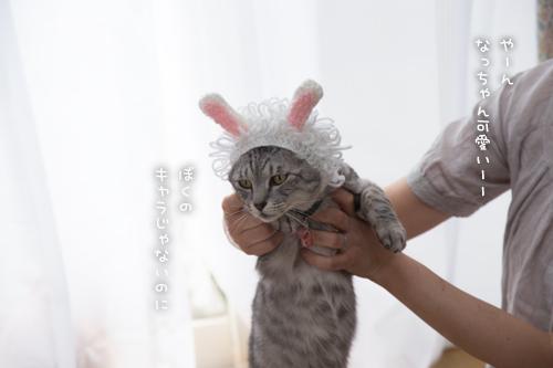 はなびちゃん接待猫への道_d0355333_16375809.jpg