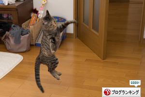 はなびちゃん接待猫への道_d0355333_16375852.jpg