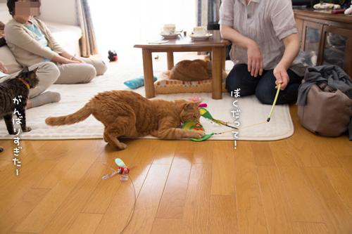 はなびちゃん接待猫への道_d0355333_16375859.jpg