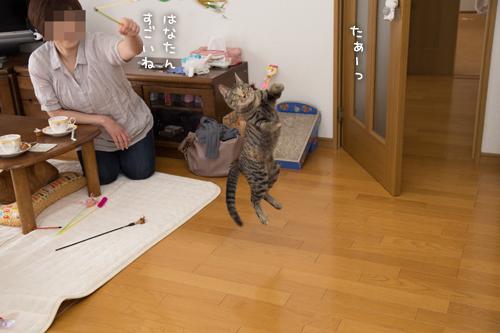 はなびちゃん接待猫への道_d0355333_16375865.jpg