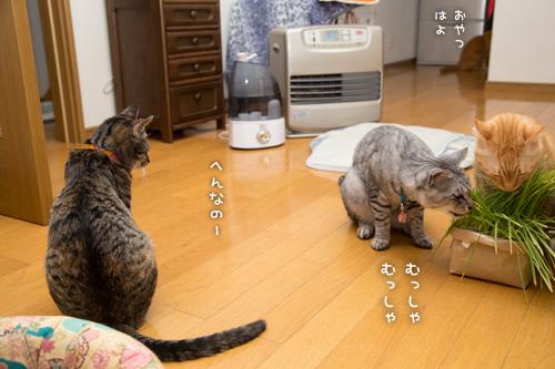 猫草の味は大人の味~_d0355333_16382748.jpg