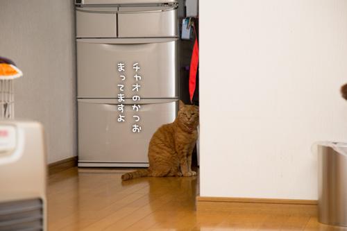 猫草の味は大人の味~_d0355333_16382759.jpg