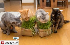 猫草の味は大人の味~_d0355333_16382795.jpg