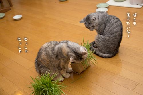 あっちの草もこっちの草も_d0355333_16383004.jpg