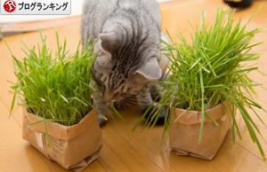 あっちの草もこっちの草も_d0355333_16383129.jpg