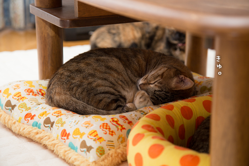 猫の寝顔。_d0355333_16383718.jpg