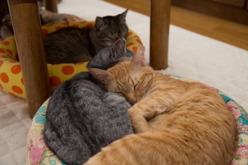 猫の寝顔。_d0355333_16383860.jpg