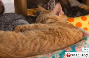 猫の寝顔。_d0355333_16383989.jpg