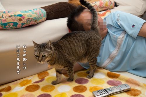 猫の愛情表現は_d0355333_16385009.jpg