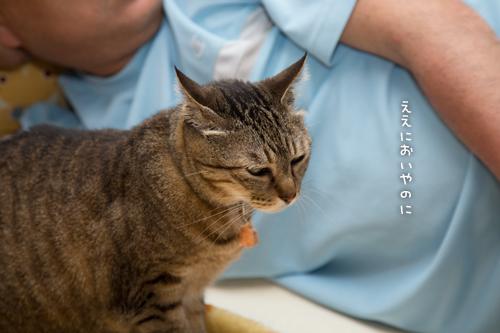 猫の愛情表現は_d0355333_16385082.jpg