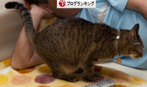 猫の愛情表現は_d0355333_16385138.jpg