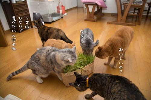 猫草わしわし_d0355333_16394800.jpg