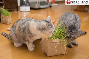 猫草わしわし_d0355333_16394815.jpg
