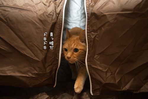 もう猫グッズでもいいんじゃないの?_d0355333_16400163.jpg