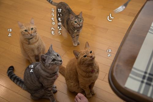 とりいさんの芋ケーキを食べたら☆前編_d0355333_16401856.jpg