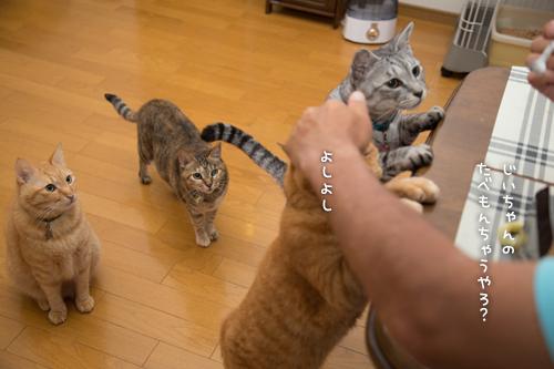 とりいさんの芋ケーキを食べたら☆前編_d0355333_16401873.jpg