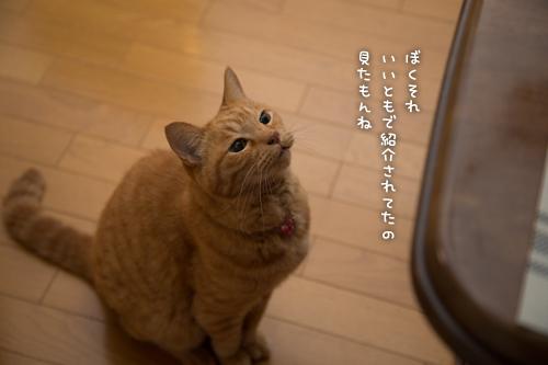 とりいさんの芋ケーキを食べたら☆前編_d0355333_16401881.jpg