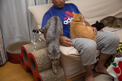 猫フェロモン_d0355333_16404986.jpg