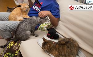 猫フェロモン_d0355333_16405091.jpg