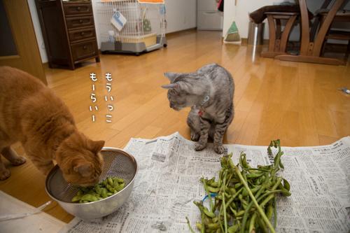枝豆ラプソディ_d0355333_16414603.jpg