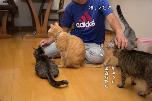 猫にまみれる_d0355333_16415120.jpg
