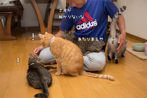 猫にまみれる_d0355333_16415177.jpg