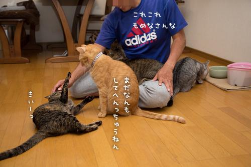 猫にまみれる_d0355333_16415238.jpg