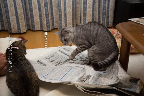新聞紙の下で_d0355333_16415650.jpg