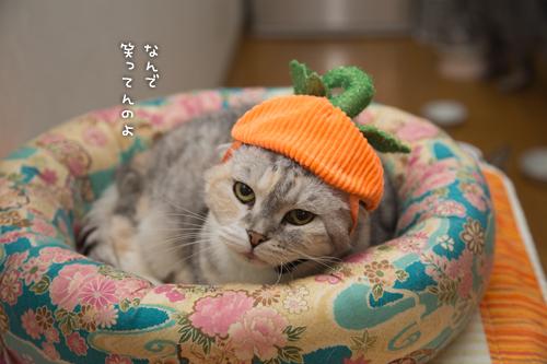 かぼちゃの姫_d0355333_16415925.jpg