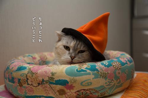 かぼちゃの姫_d0355333_16415983.jpg