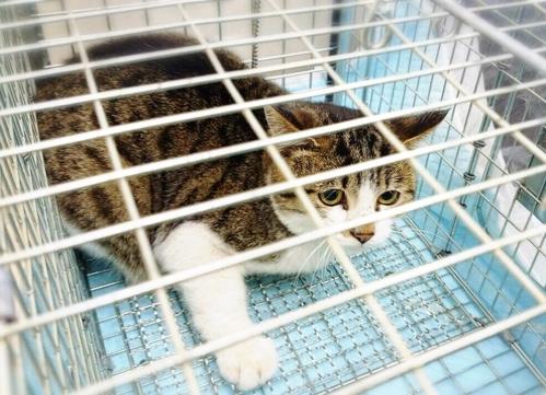 ドラックストアの猫たち☆状況_d0355333_16422230.jpg